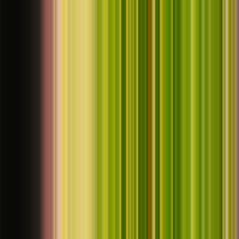 Moss | 613